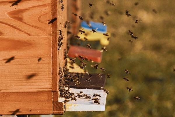 Est-il possible d'avoir des ruches dans son jardin ?